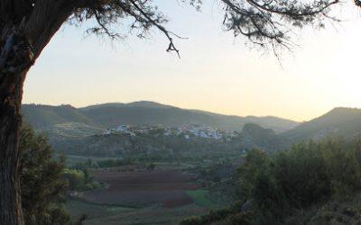Narboneta